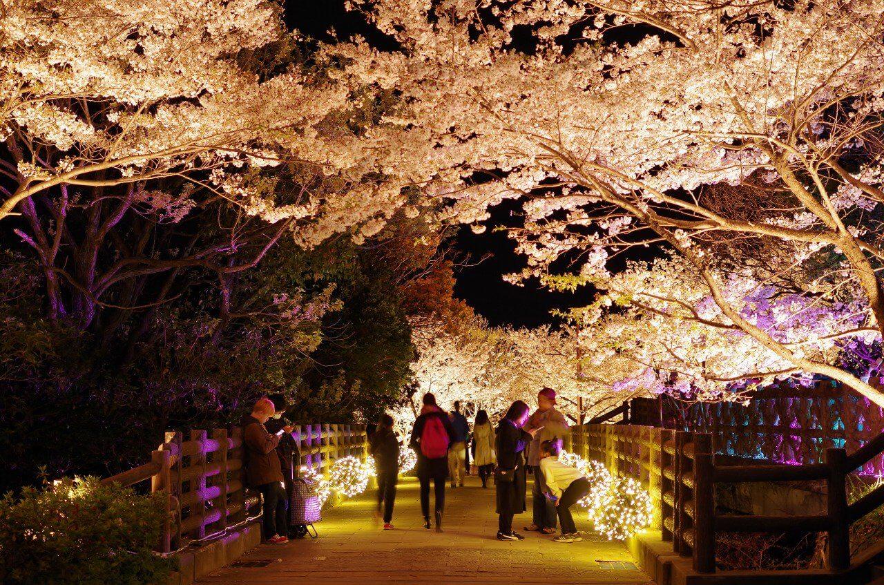 須磨浦公園・須磨浦山上遊園・須磨観光ハウス・敦盛桜の様子